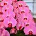【クオーレ】山鹿市に新しく生まれたお花屋さんの品揃えが攻めててすごい。[山鹿市]